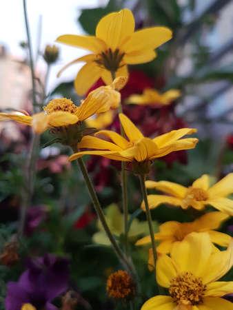 Summer flowers 写真素材 - 106417872