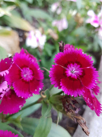 Beautiful red flower in the summer season 写真素材