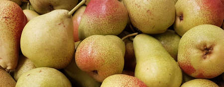 Fresh pears at home and grocery stores from the fields 写真素材