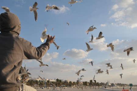 seabirds: Flying sea birds