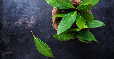 natural moody: Fresh organic bay leaves in a basket on a grunge rusty black table. Selective focus, copy space background, top view overhead flat lay