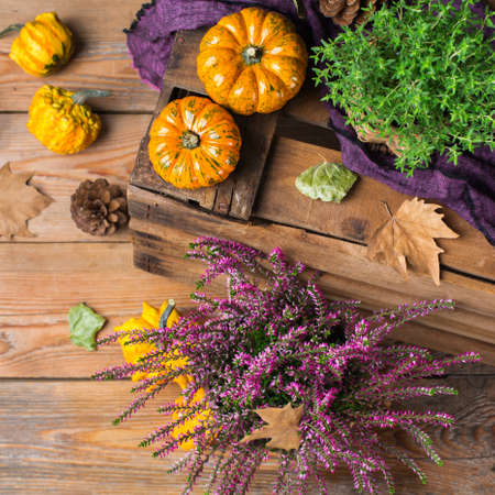 Fall autumn harvest thanksgiving concept. Organic fresh ripe festive orange pumpkins, green thyme and purple flowers on a rustic wooden table. Top view flat lay