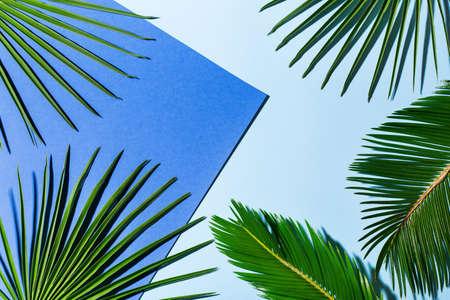Sfondo creativo con foglie di palma tropicali con ombra audace sul blu classico. Natura minima, floreale, concetto di vacanza estiva di vacanza. Copia spazio, disposizione piatta, vista dall'alto Archivio Fotografico
