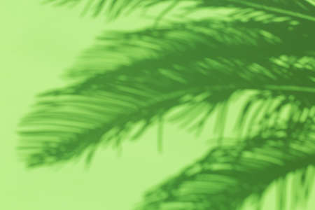 Abstract unfocused blurred mint green background with palm leaves shadows. Tropical, summer, holidays, vacations concept.