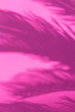 Abstract unfocused blurred pink background with palm leaves shadows. Tropical, summer, holidays, vacations concept.