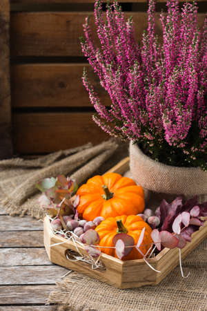 Creative autumn fall thanksgiving day composition with decorative orange pumpkins and purple heather. Still life wooden background. Floral, botanical concept.