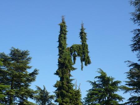 vegetal: pattern tree Stock Photo