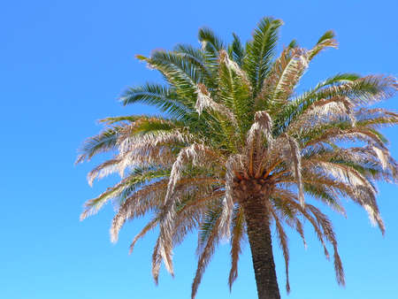 date palm tree in summer Stock Photo - 41403738