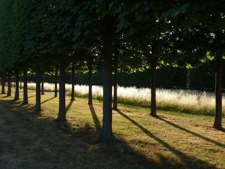 Tree path, in a Park, near Paris Stock Photo - 41691179