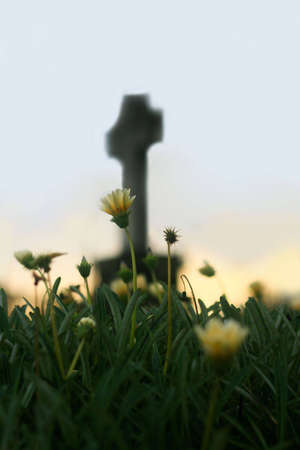 headstone: A Yellow Flower with Cross in Background at Dusk Stock Photo