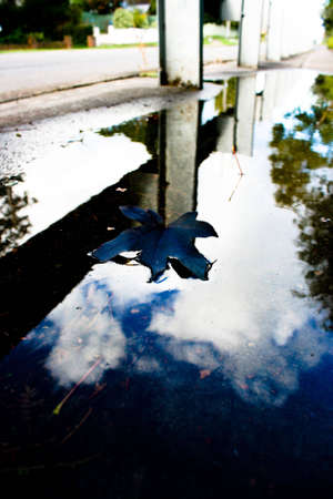 Purple Autumn Leaf in a Puddle with Reflections photo