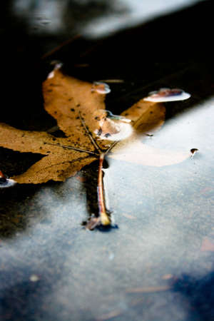 Yellow Autumn Leaf in a Puddle with reflections photo