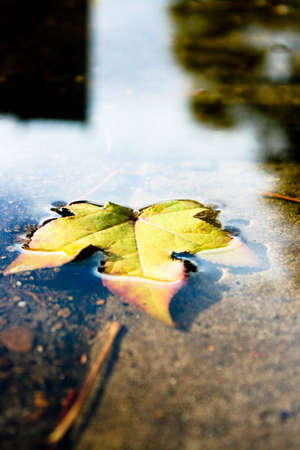 Autumn Lfeaf Floating in a Puddle photo