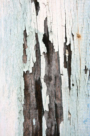 Textue of old paint peeling of wood photo