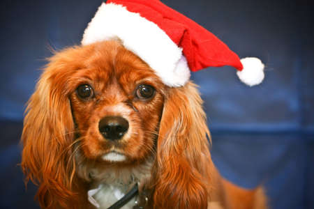 Christmas Puppy: Santa Paws photo
