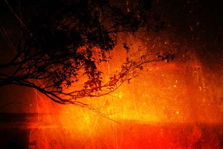 aboriginal: Sunset silueta de un �rbol de goma Foto de archivo