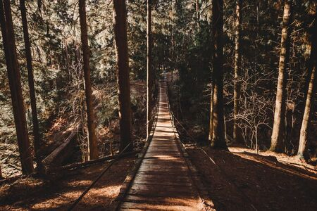 Suspension bridge in the pine forest photo scenic view travel wood outdoor park hiking.