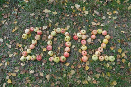 2012 made of apples on grass and leaf background in autumn  Stock Photo