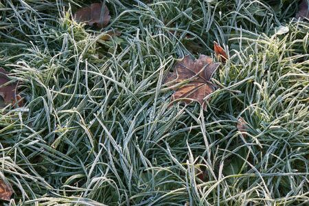 Frozen grass and  leaves in late fall Stock Photo