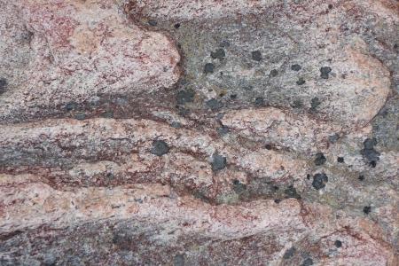 quartzite: Surface of natural  dark red stone  crimson quartzite porphyry  with black spots as background