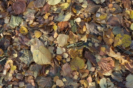Group of leaves  in autumn colours close up
