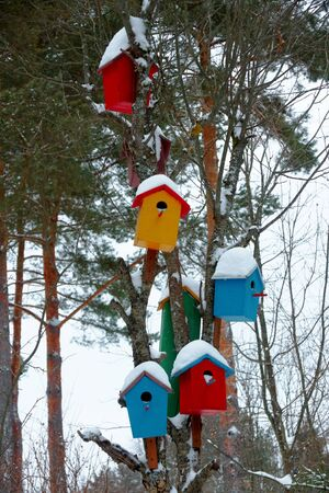 Multicolored birdhouses on a tree in winter Stock Photo