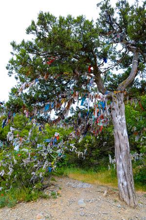 Sacred wishing juniper tree of desires and dreams
