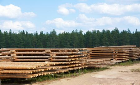 Logging in forest Stock Photo