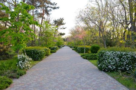 Alley in spring park in Anapa, Krasnodar region, Russia Stock Photo