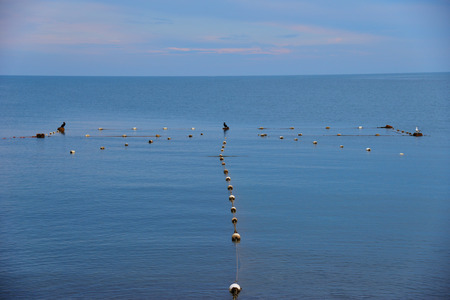 Mesh in seacoast and the birds - cormorant and seagull, sitting on float