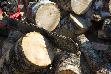 Chainsaw and piled fresh birch firewood Stock Photo - 98913836
