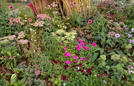 Multi-colored petunia flowers, hosta, sedum and perennial plants on flowerbed Standard-Bild - 124953329