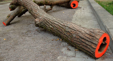 Tree trunks with red paint