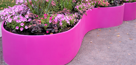 Multi-colored petunia flowers and perennial plants on pink flowerbed