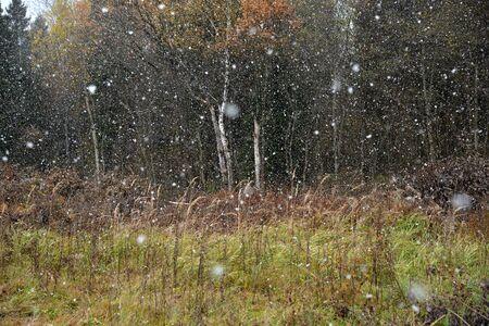 First falling snow on autumn forest background Standard-Bild - 134137607