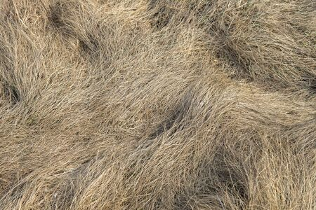 Dry grass of meadow in early spring 版權商用圖片