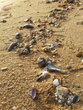 seashores: Shell on the beach