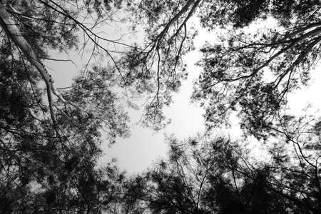 Monochrome of treetop with sky and cloud background.