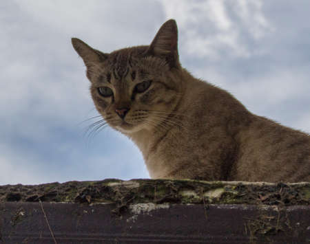 Close up of cat peeping on the roof with cloudy background under shadow in the evening.