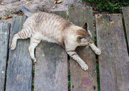 Top view of cat sitting on wooden bridge with copy space. Stock Photo