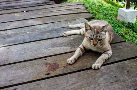 Close up of cat sitting on wooden bridge with copy space.