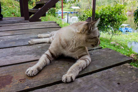 Close up of cat sitting and turn to face left side on wooden bridge in the garden.