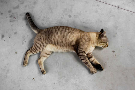 Top view of cat is sleeping on concrete floor in the home. Close up of cat on the ground.