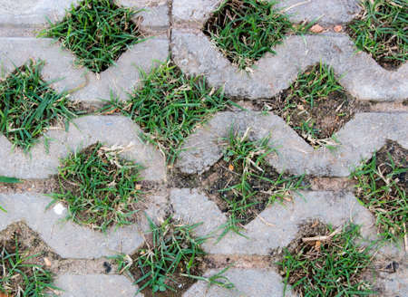 Background and texture of green grass in concrete block for pathway. Close up of grass in the garden.