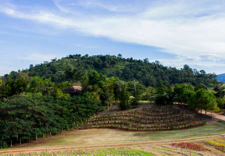 View of planting terrace and big mountain and green trees in the farm with blue sky and cloudy.