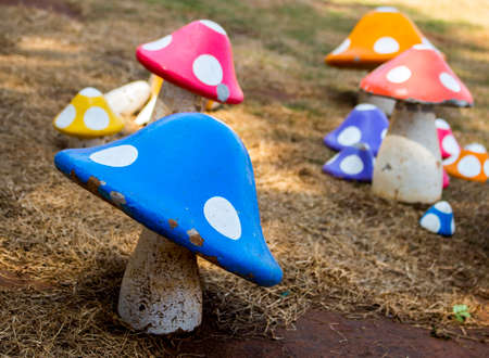 Close up of colorful mushroom on dry lawn in the garden with copy space.