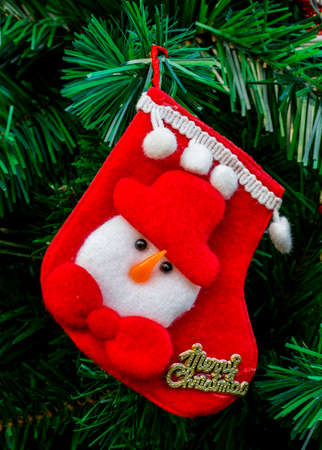 Close up of red sock hanging on Christmas tree in Christmas day with green branch background.