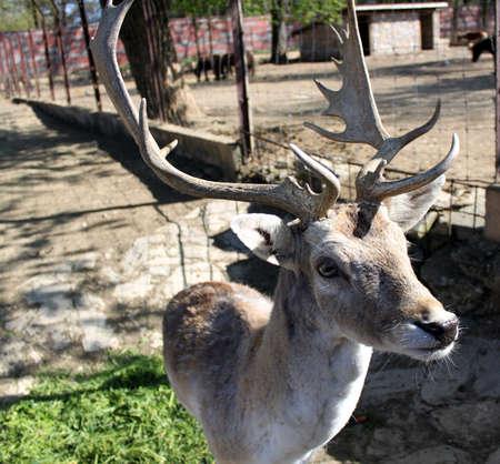 Deer in my Zoo photo