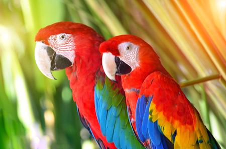 열 대 숲 조류에 빨간색 두 앵무새