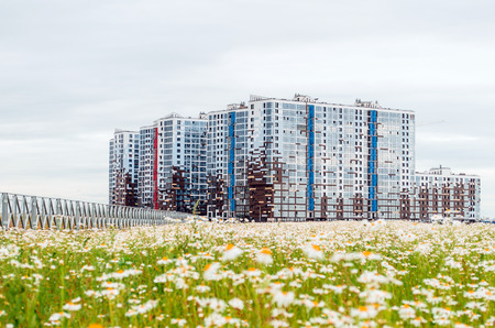 Multi-storey houses chamomile flowers. Russia, Saint-Petersburg July 2017